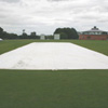350gsm Flat Sheet Wicket Cover - 4m x 25m