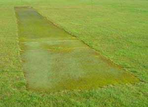 Here, a dip in the base has allowed water to pool encouraging moss/algae on the wicket.