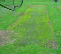 A prime example of a cricket wicket that has been extremely neglected.